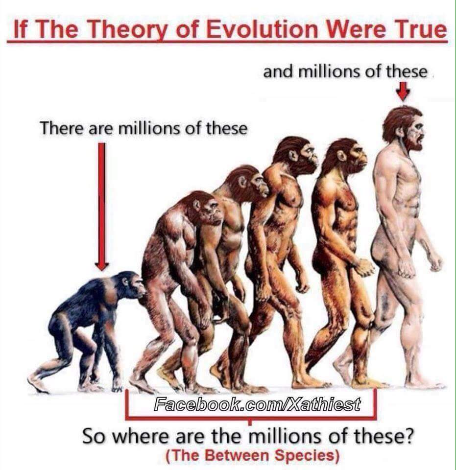 an argument against the evolution theory 17 evidences against evolution 17 evidences against evolution by kevin martin 1 moon dust 2 magnetic field not evolutionary progression evolution theory.