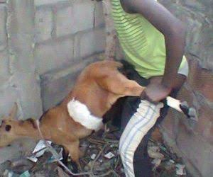 Man Caught Having Sex With A Goat Inside A Bush In Ondo, Goat Dies After