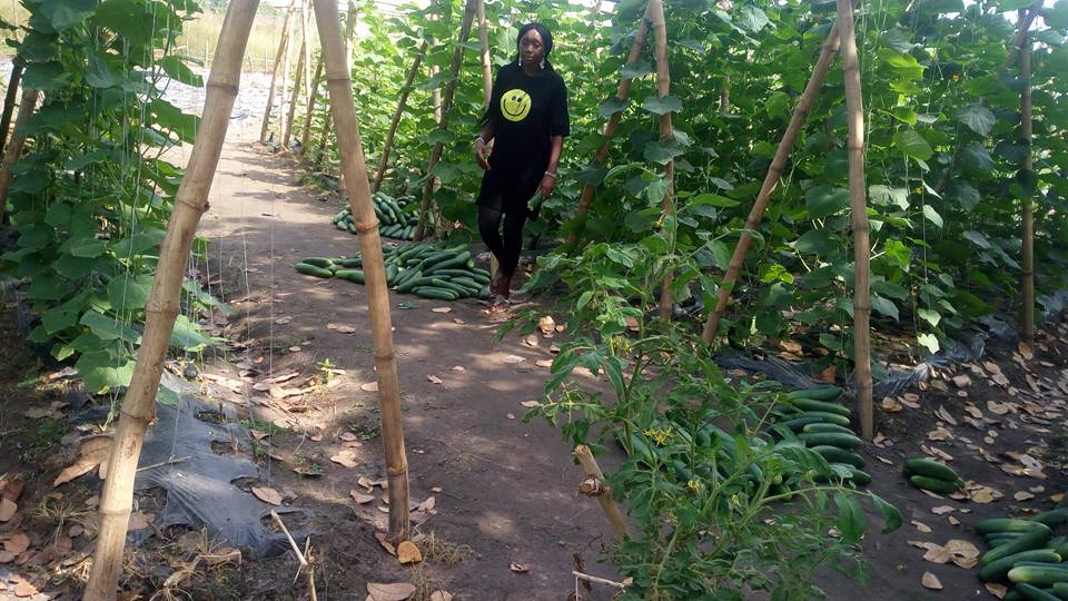 Photos Of Harvested Giant Size Cucumbers By YEN President, Benue State 4489291_z2_jpg5dee2ee0480a043427379a91ef1502c9