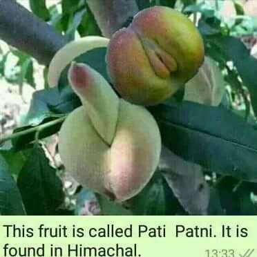 Breaking News!!! The Original Fruit Adam And Eve Ate discovered ...
