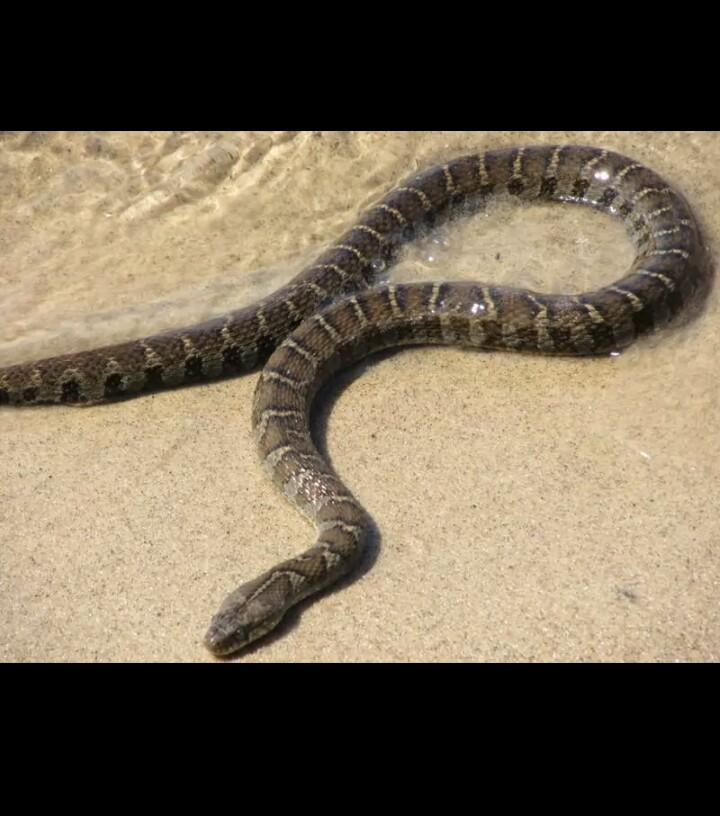 Top 10 Non-venomous Snakes In The World With Pictures