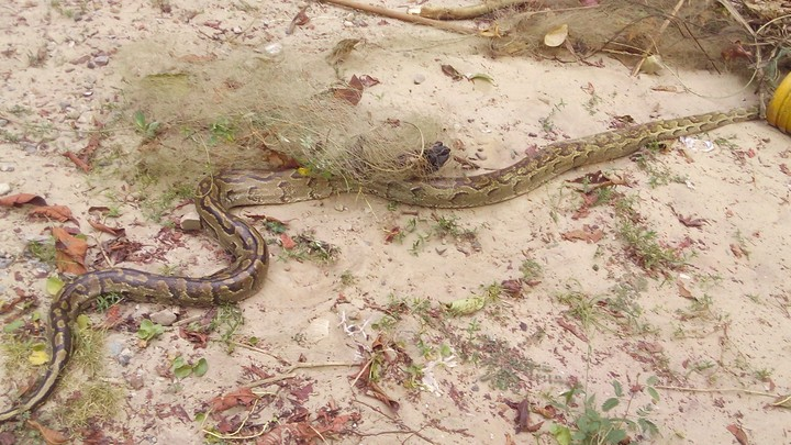 How Do I Shut Out Snakes From My Poultry Farm? - Agriculture