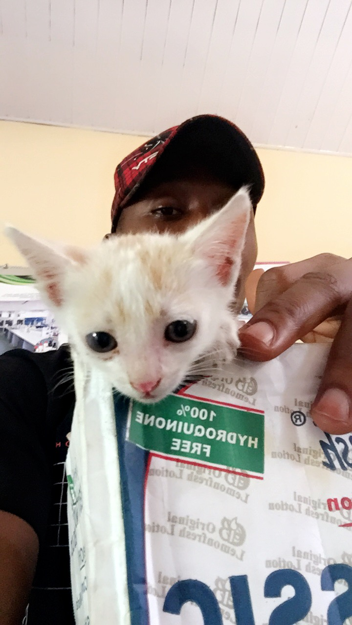 what to feed kittens at 4 weeks