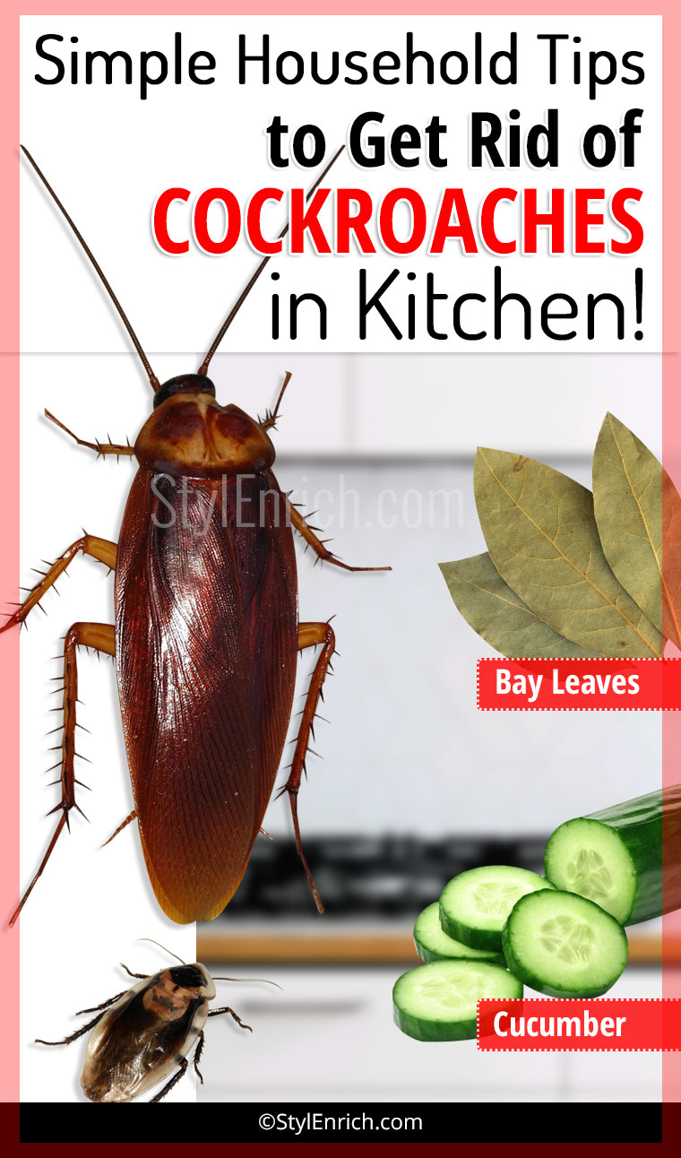 Simple Household Tips To Get Rid Of Cockroaches In Kitchen