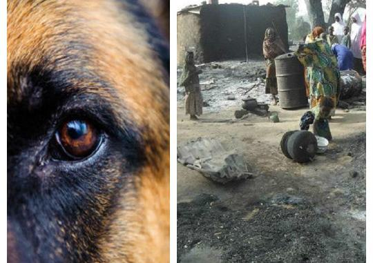 The Dog That Foiled Boko Haram Suicide Bombing In Borno Gets Posthumous Award