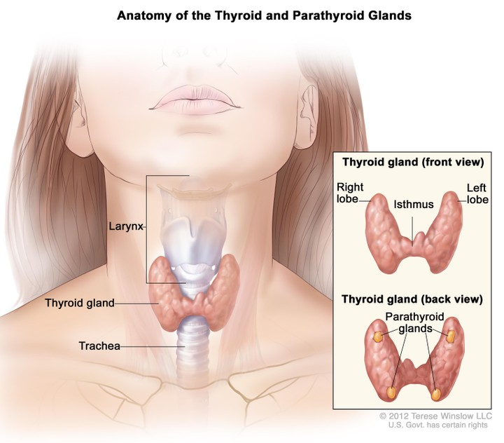 How Healthy Is Your Adams Apple Find Out More Health Nigeria