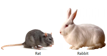 Difference Between Rabbit And Rat Education Nigeria