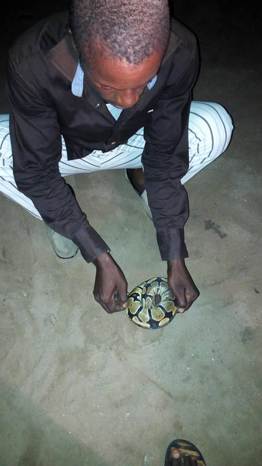 See The Snake My Friend Uncle Killed For Her To Eat (photos) 5363094_1858185817413642161557153432451080367265080n_jpgda9e95481751c1ad84beb84c28847357