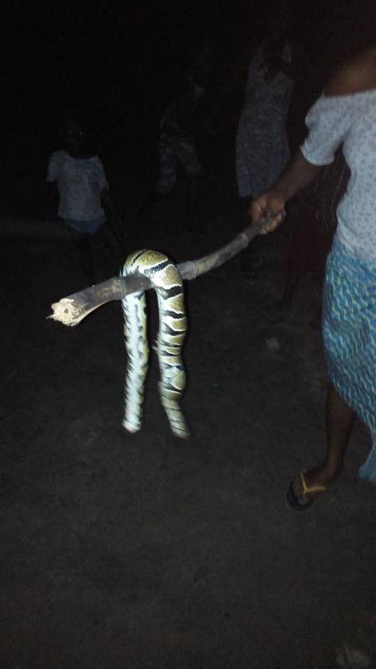 See The Snake My Friend Uncle Killed For Her To Eat (photos) 5363097_1862036317413692028218836718966556049666140n_jpgc936a85b4581596e4eb04e20ecff4551