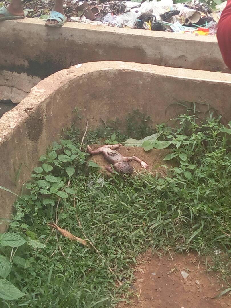 WICKEDNESS! Premature Baby Dumped At Federal Polytechnic Unwana Female Hostel [Disturbing photos]