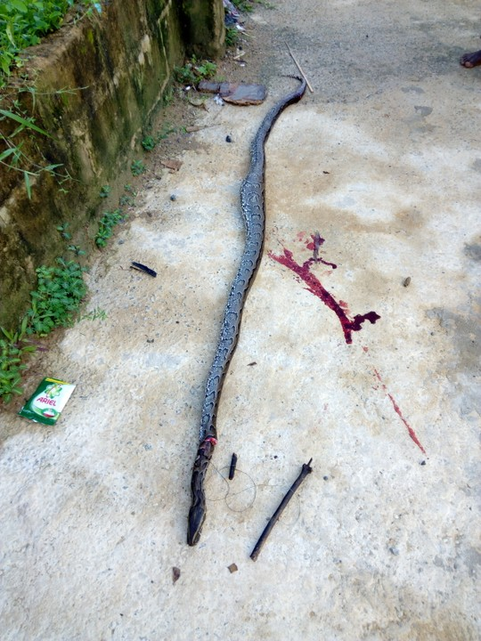 Python Killed and Sold For N1000 Today