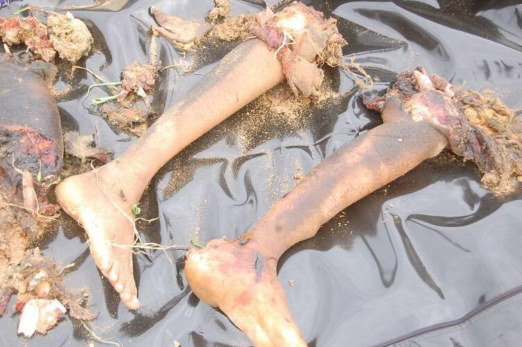 See Body Parts Of Boko Haram Bombers Who Blew Themselves Up In Borno (Graphics Pics)