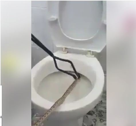 Man Finds Snake Hidden In His Toilet While Trying To Make Use Of It. Photos    Politics   Nigeria