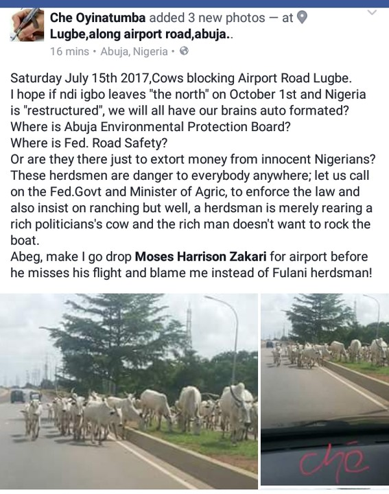 Fulani Herdsmen And Their Cattle Take Over Airport Road Abuja (Photos)