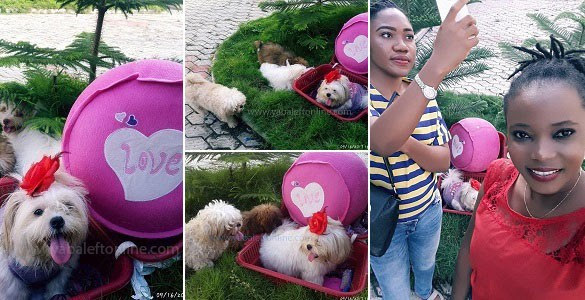 Lady Holds Baby Shower For Her Pregnant Dog In Abuja (Photos)