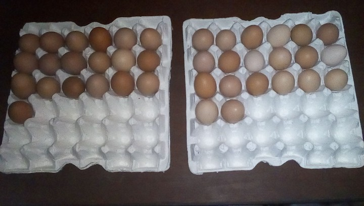 How Much Do You Sell Your Eggs? - Agriculture - Nigeria