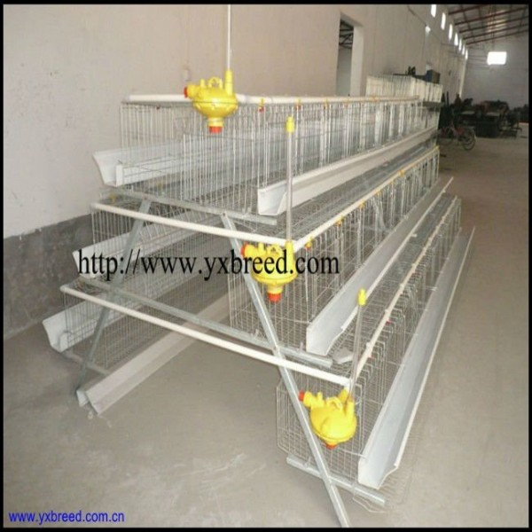 egg production business plan philippines international
