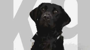 Bomb-Sniffing Dog Fired From CIA For Refusing To Sniff Bombs
