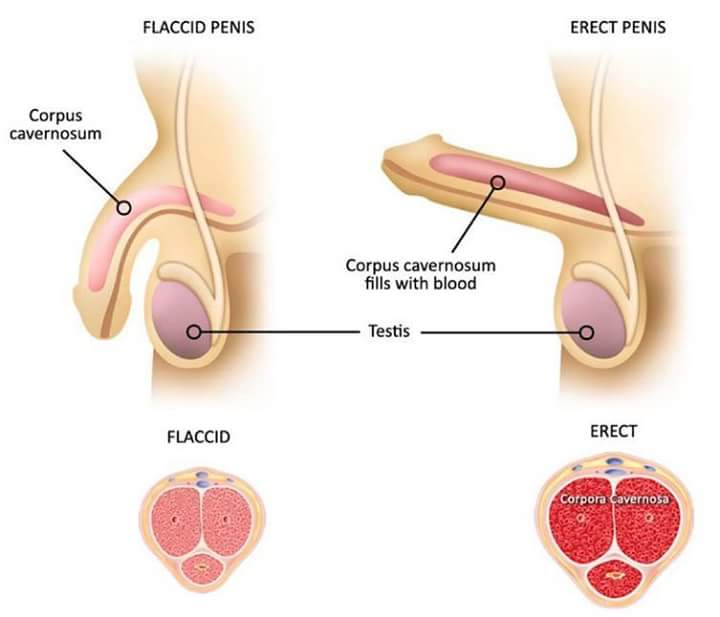 Ejaculation from erect penis