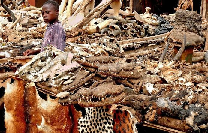 Akodessewa Fetish Market, The World's Largest Voodoo Market In Togo (Graphic Pics)