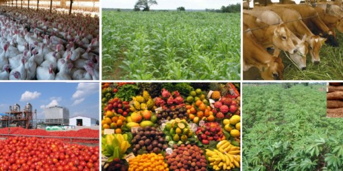 Best Agricultural Business Ideas In 2018   Agriculture   Nigeria