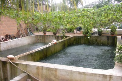 I need a loan of 200k to start catfish farming business for Fish pond business
