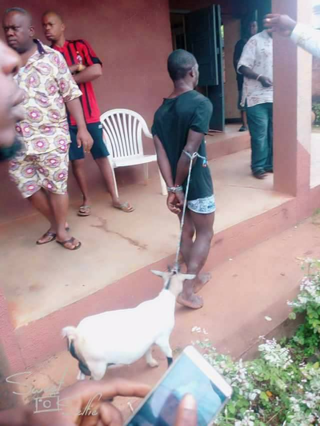 Goat Thief Paraded In Ekwulobia, Anambra
