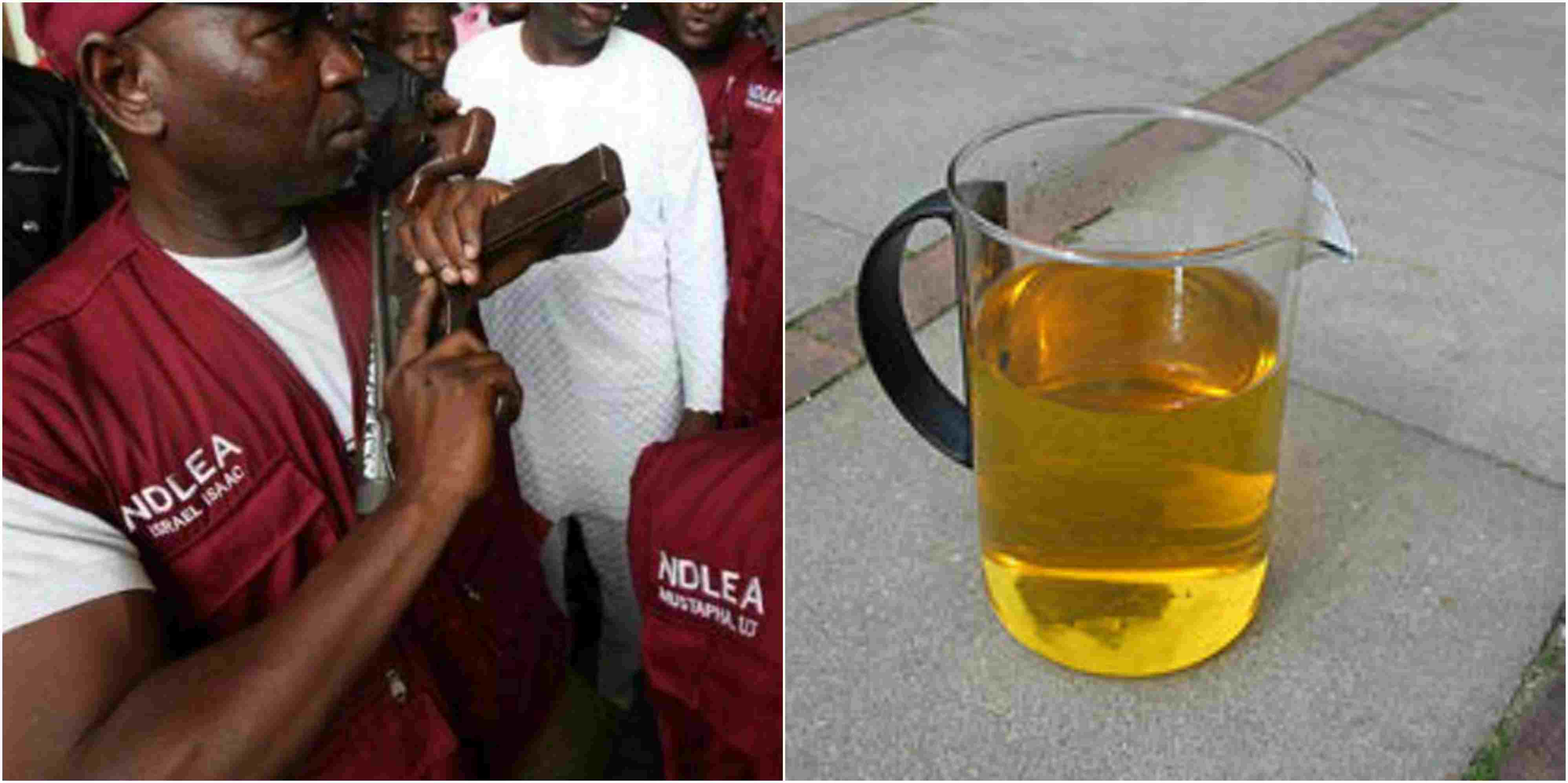 SHAME!!!:   Youths In Adamawa Now Drink Human Urine To Get High – NDLEA